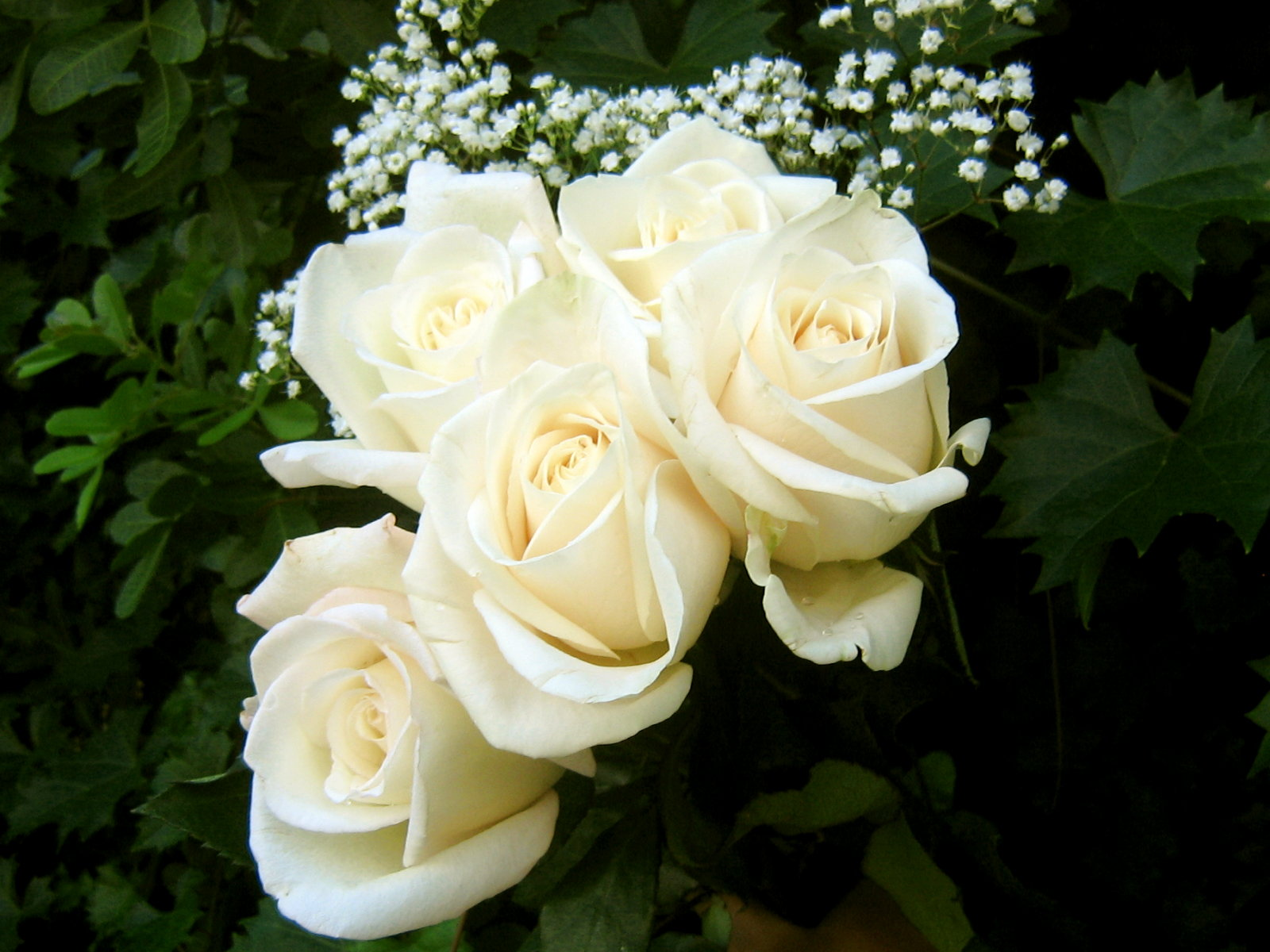 Flower one white roseyouthfulness untold tales by a whimsical white roses mightylinksfo
