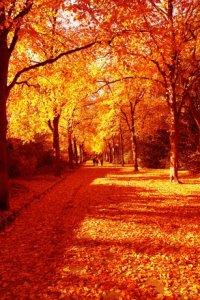 autumn-1401941