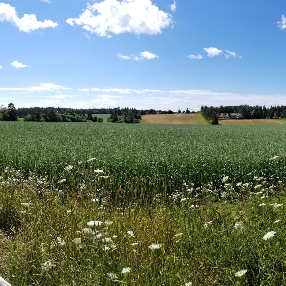Such beautiful flower fields